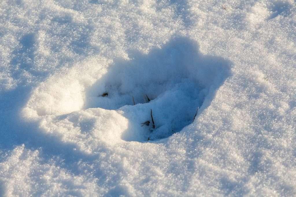 Deer print in snow – photo by Greg Reese