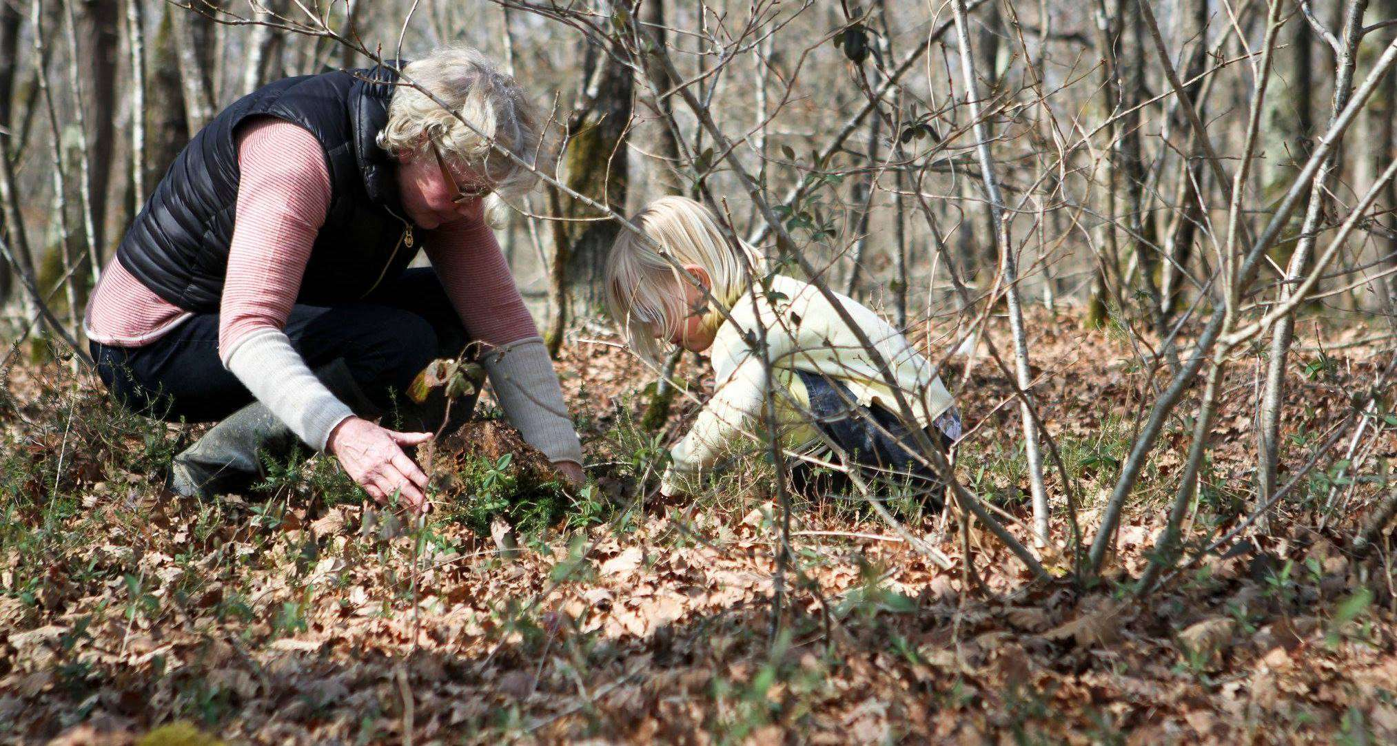 Searching for woodland treasures