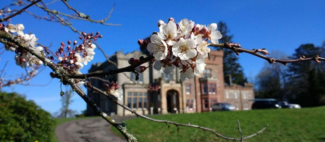 Carbeth House with spring blossom – photo by Sam Lyth
